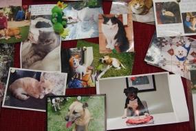 【流浪猫狗】以领养代替购买,以绝育代替灭绝 - 它们不是商品!
