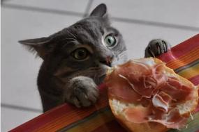 【萌宠】猫咪们偷吃食物被抓个正着的逗比瞬间