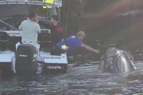 【超有爱】好机智的鲸鱼:悉尼被困,求助过路少年