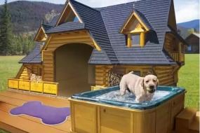 【宠物】人们梦寐以求的房子,都让狗狗住进去了
