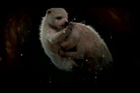 【神奇】四维成像展示子宫内动物胎儿,生命真奇妙!