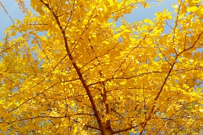 【故都的秋】几张图告诉你,北京的秋天到底有多美
