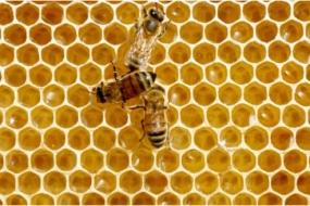 澳洲蜂蜜污染全球最严重,还会致癌?!