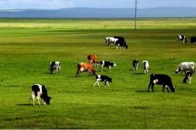 澳洲最大乳业龙头被中国商人买下,你怎么看?