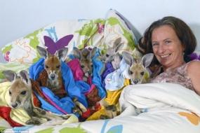 放弃原本光鲜的工作 北领地女子致力于拯救小袋鼠十余年