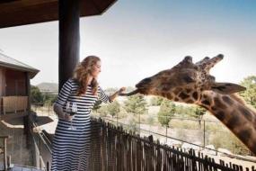 """住进动物园!带你睡遍澳洲能""""摸""""萌宠的酒店"""