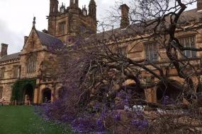 什么?悉尼大学的蓝花楹带着伙伴回来了!