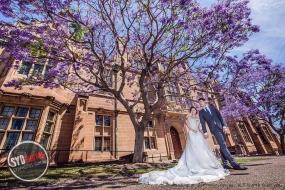 又到了蓝花楹盛开的时候,悉尼哪里可以观赏到漂亮的蓝花楹?